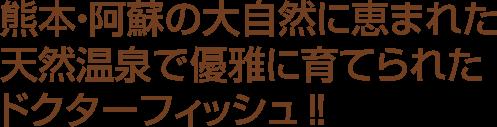 熊本・阿蘇の大自然に恵まれた天然温泉で優雅に育てられたドクターフィッシュ‼